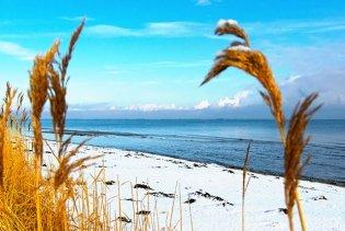 Strandhafer, schneebedeckter Strand und Meer